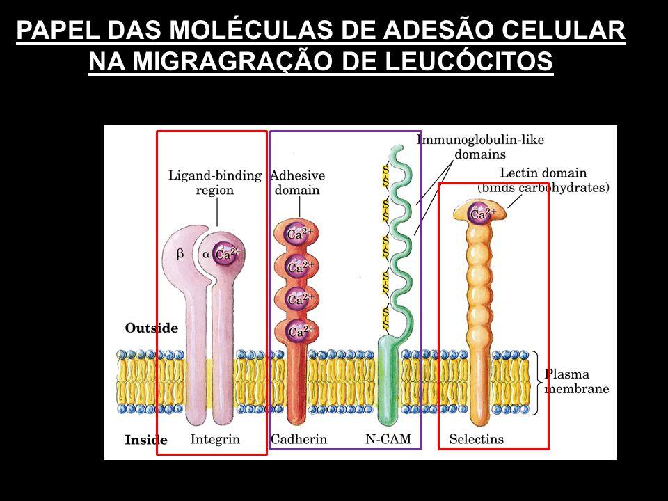 PAPEL DAS MOLÉCULAS DE ADESÃO CELULAR NA MIGRAGRAÇÃO DE LEUCÓCITOS