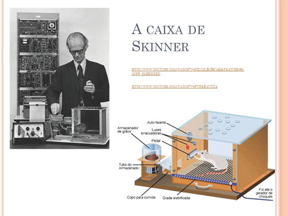 A caixa de Skinner http://www. youtube. com/watch
