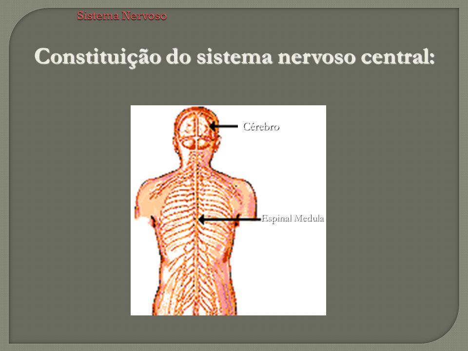 Constituição do sistema nervoso central: