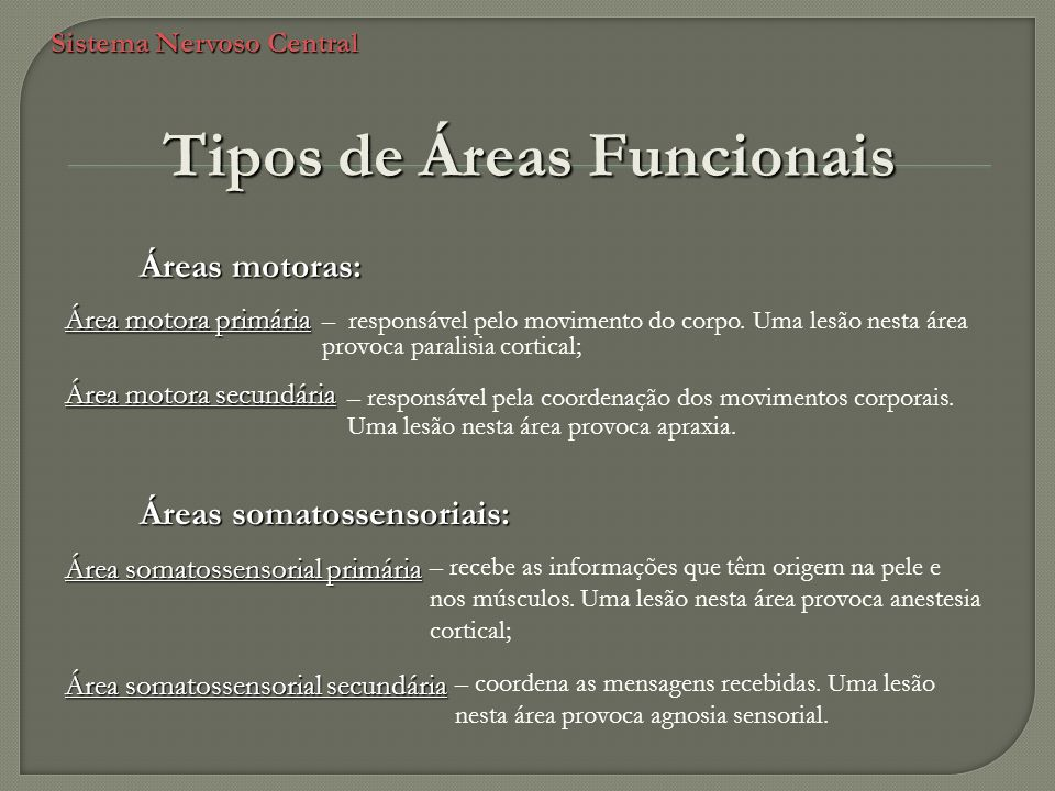 Sistema Nervoso Central Tipos de Áreas Funcionais