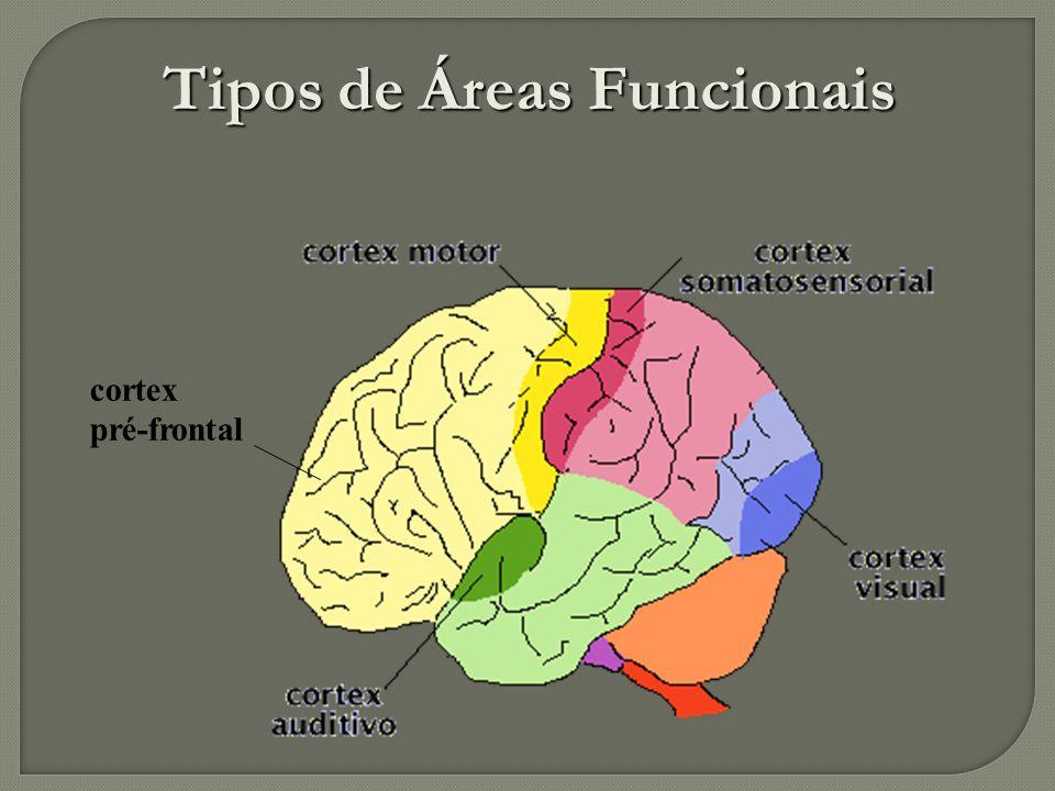 Tipos de Áreas Funcionais