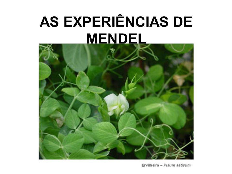 AS EXPERIÊNCIAS DE MENDEL