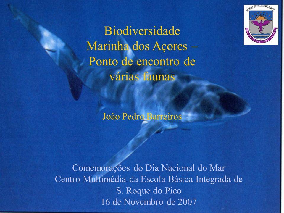 Biodiversidade Marinha dos Açores – Ponto de encontro de várias faunas