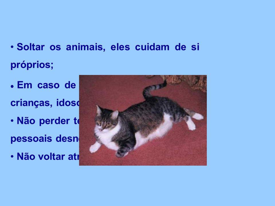 Soltar os animais, eles cuidam de si próprios;