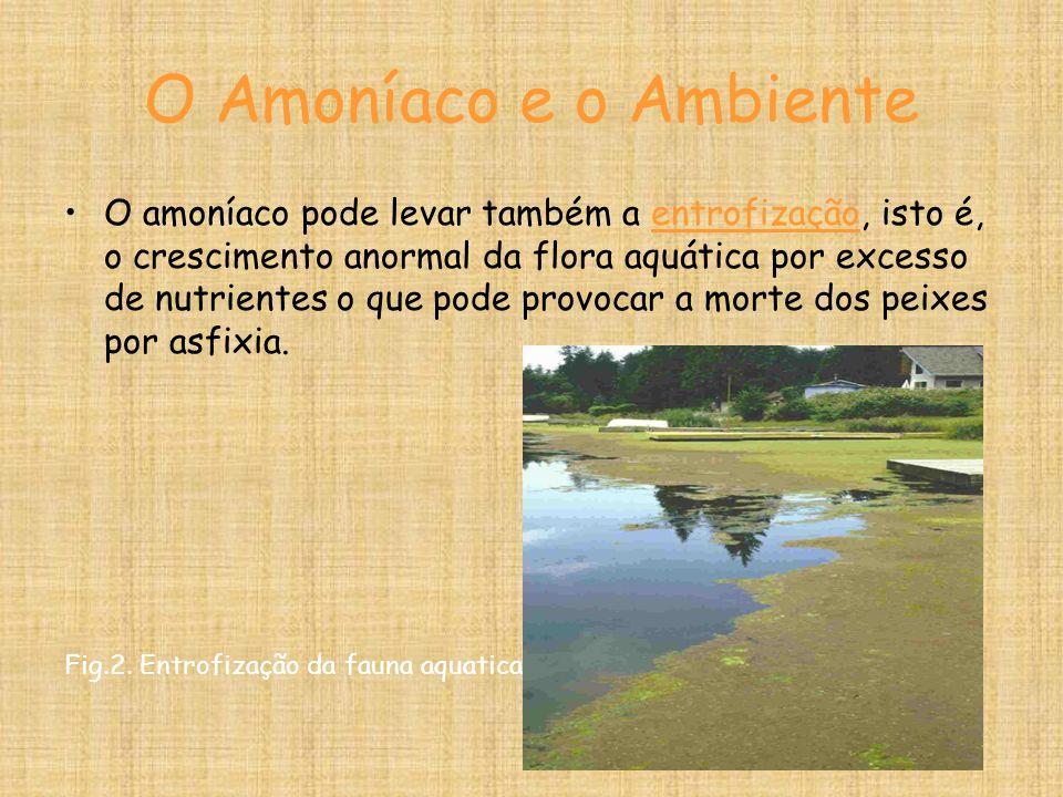O Amoníaco e o Ambiente