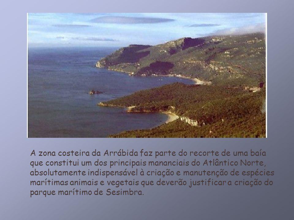 A zona costeira da Arrábida faz parte do recorte de uma baía que constitui um dos principais mananciais do Atlântico Norte, absolutamente indispensável à criação e manutenção de espécies marítimas animais e vegetais que deverão justificar a criação do parque marítimo de Sesimbra.