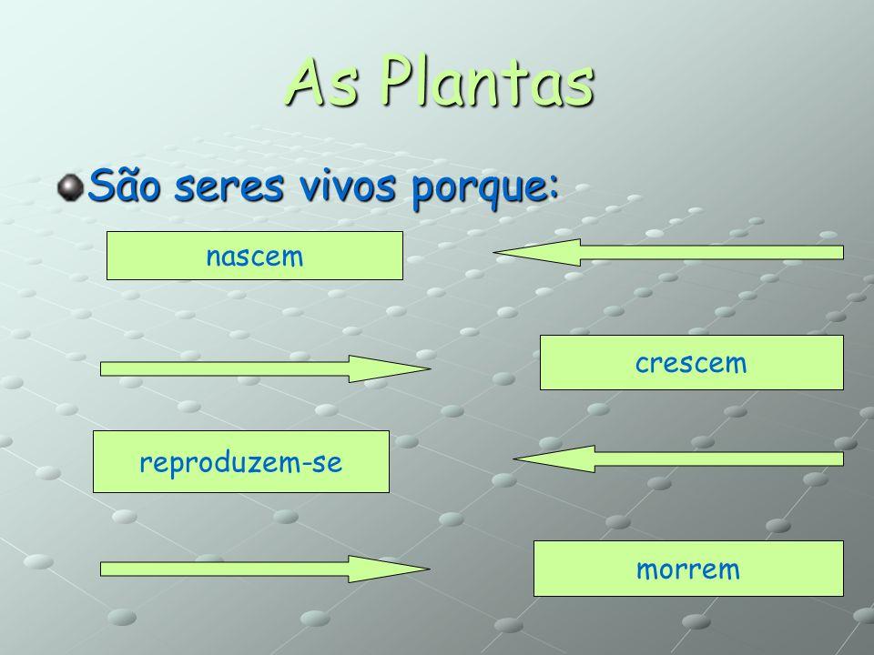 As Plantas São seres vivos porque: nascem crescem reproduzem-se morrem