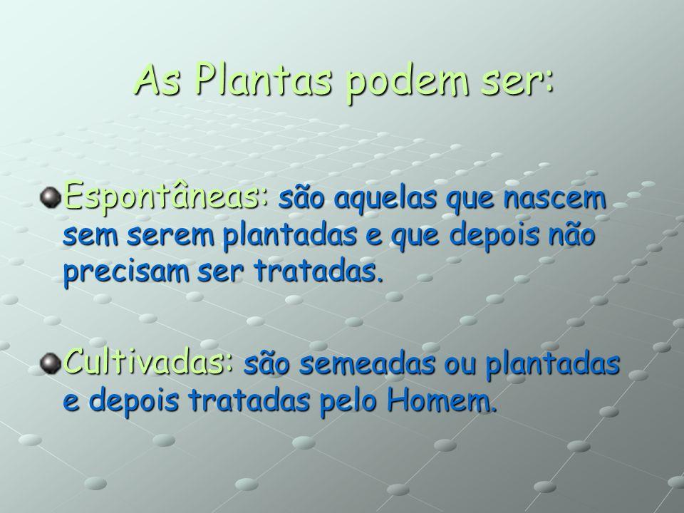 As Plantas podem ser: Espontâneas: são aquelas que nascem sem serem plantadas e que depois não precisam ser tratadas.