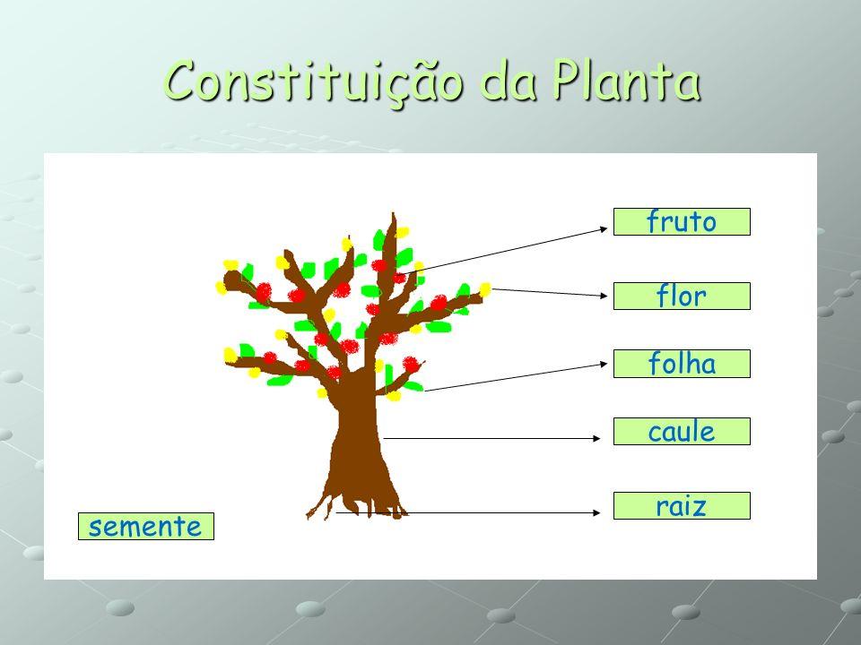 Constituição da Planta