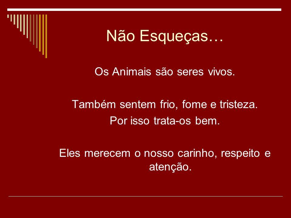 Não Esqueças… Os Animais são seres vivos.