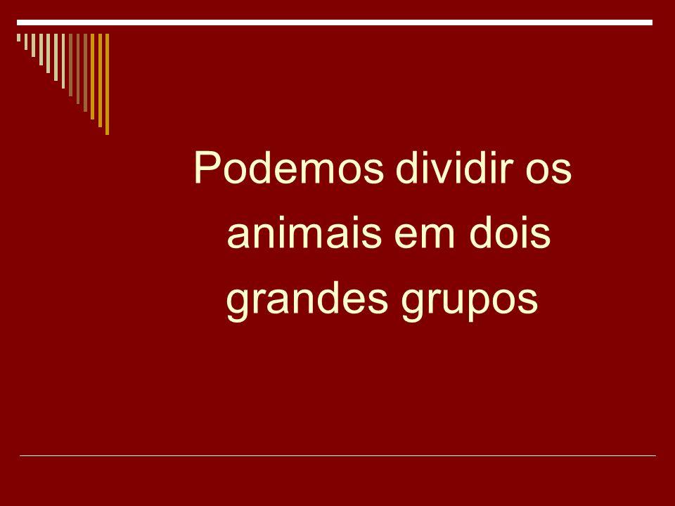 Podemos dividir os animais em dois grandes grupos