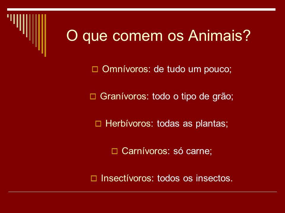 O que comem os Animais Omnívoros: de tudo um pouco;