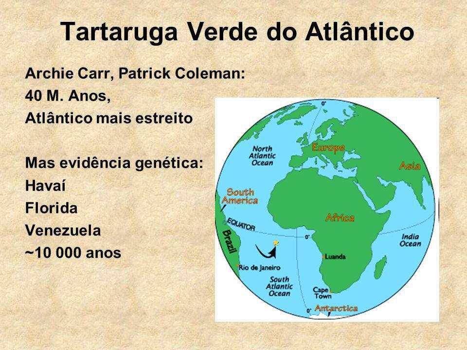 Tartaruga Verde do Atlântico