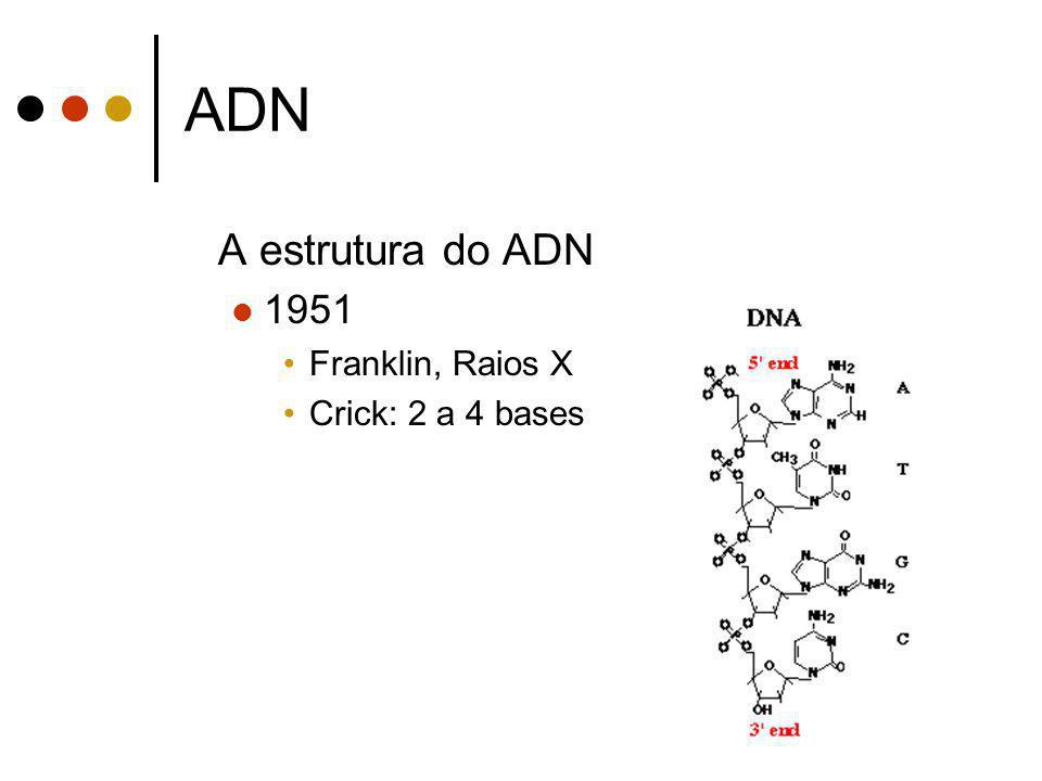 ADN A estrutura do ADN 1951 Franklin, Raios X Crick: 2 a 4 bases