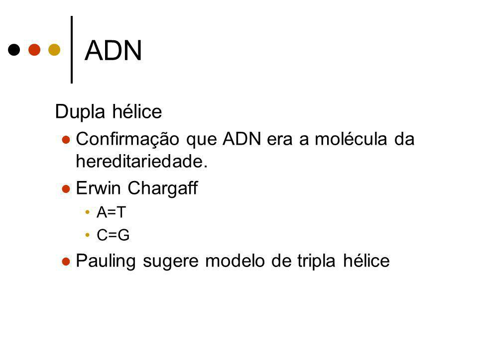 ADN Dupla hélice. Confirmação que ADN era a molécula da hereditariedade. Erwin Chargaff. A=T. C=G.