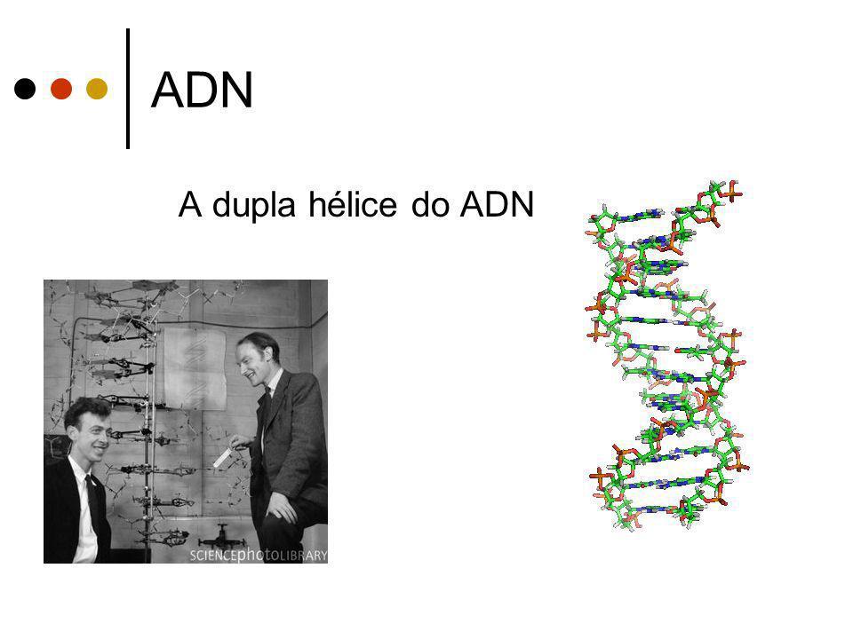 ADN A dupla hélice do ADN