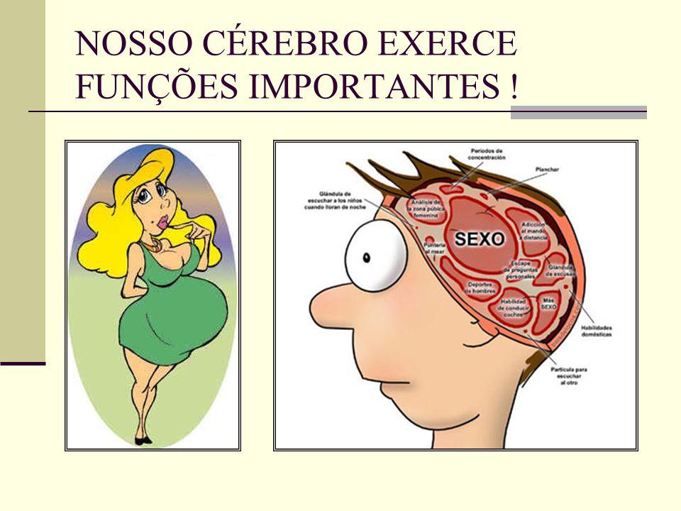 Fantástico Anatomía Y Fisiología Del Cerebro Ideas - Imágenes de ...