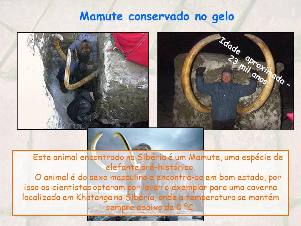 Mamute conservado no gelo