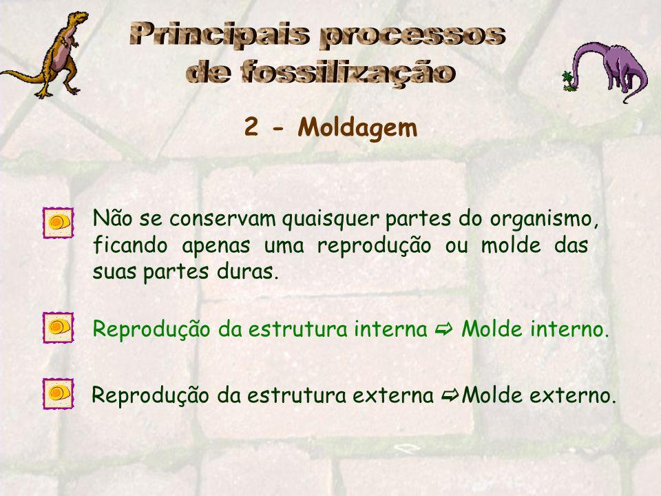 Principais processos de fossilização 2 - Moldagem