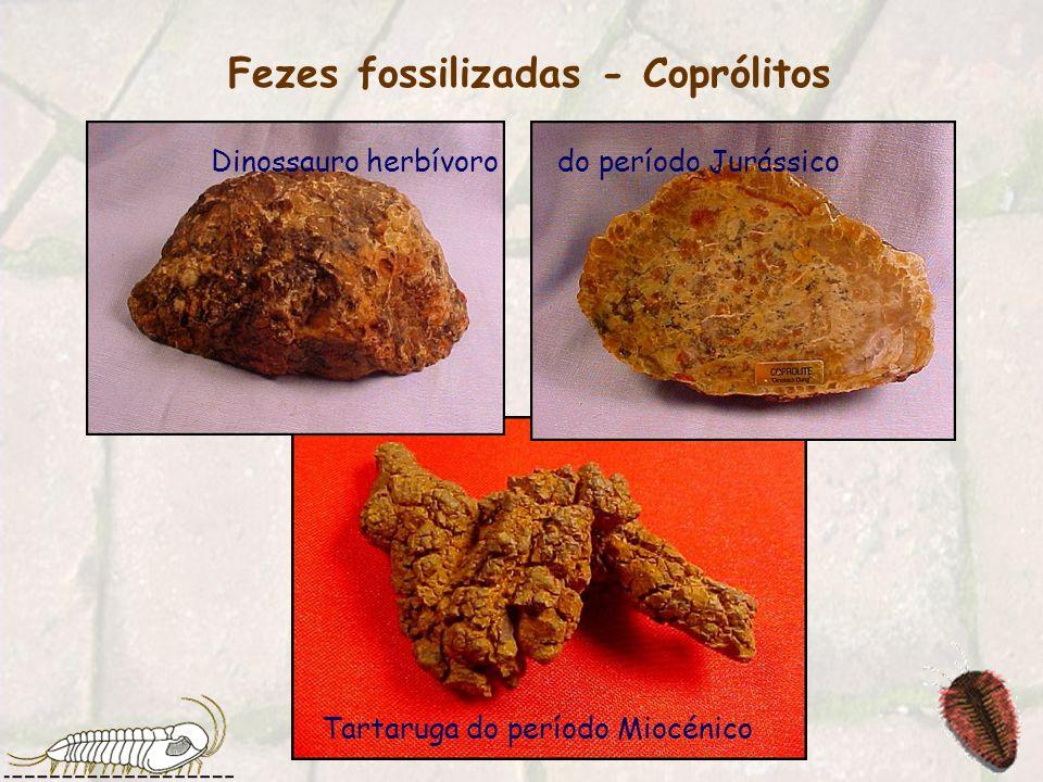Fezes fossilizadas - Coprólitos