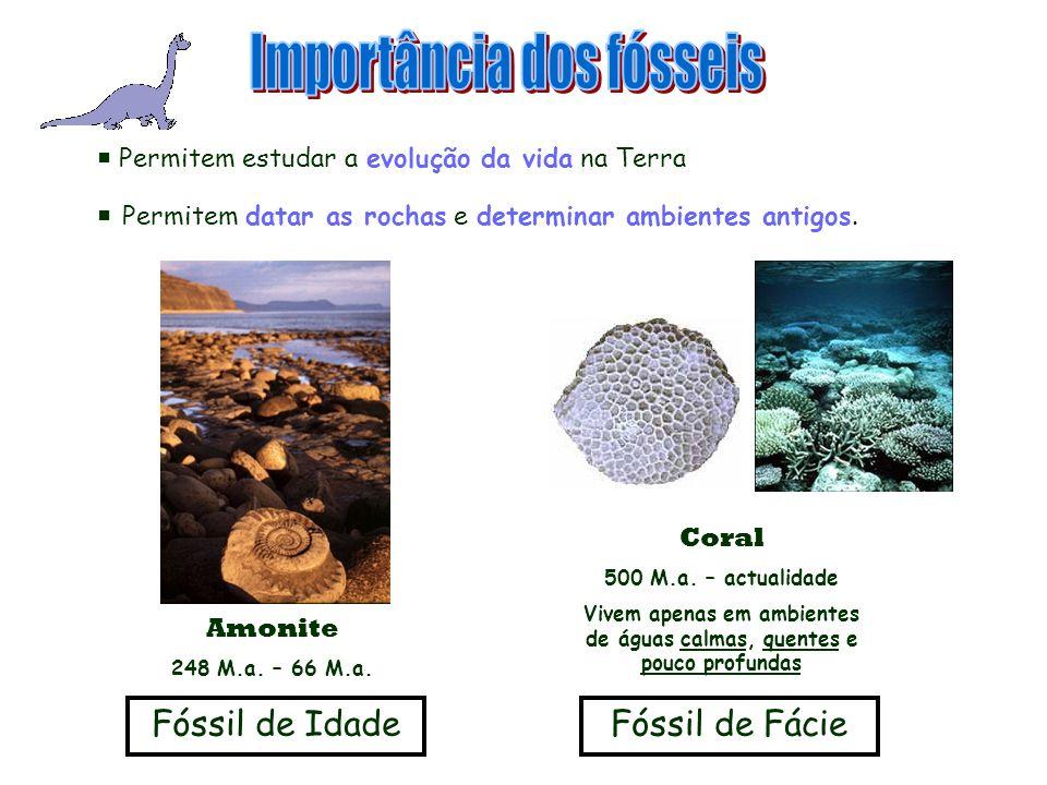 Vivem apenas em ambientes de águas calmas, quentes e pouco profundas