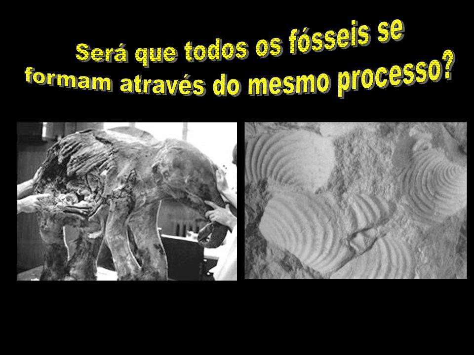 Será que todos os fósseis se formam através do mesmo processo