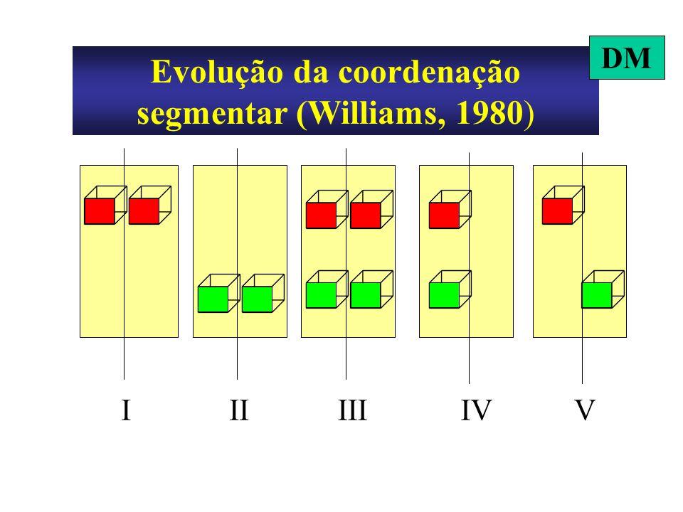 Evolução da coordenação segmentar (Williams, 1980)