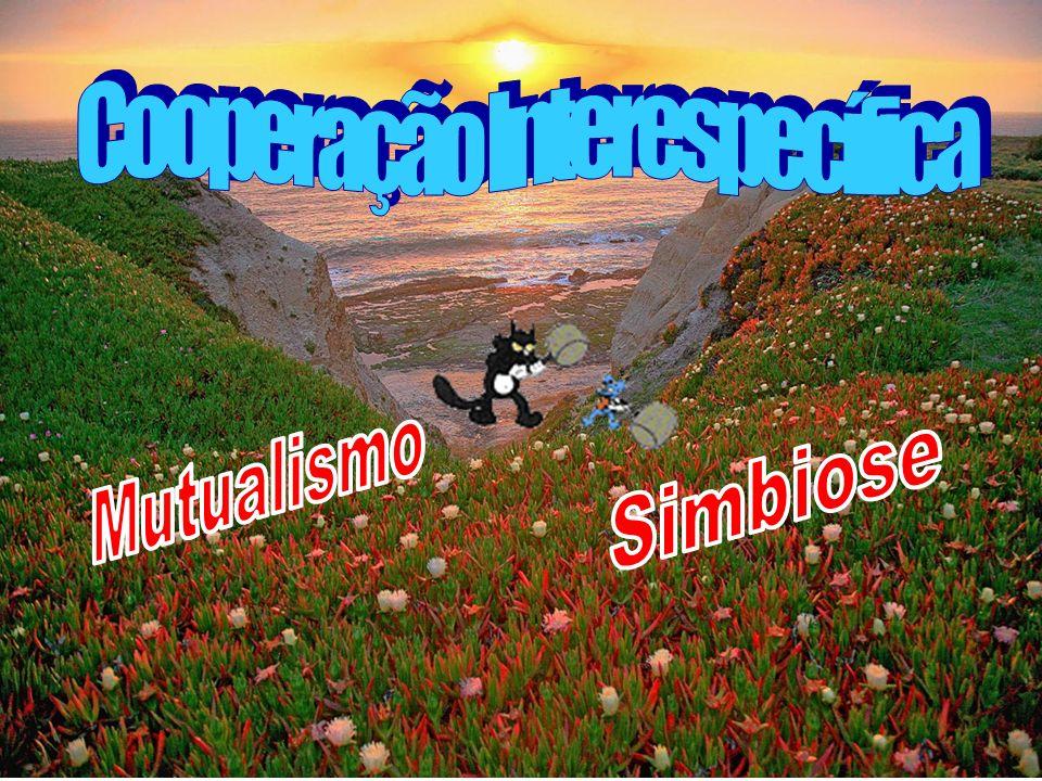 Cooperação Interespecífica