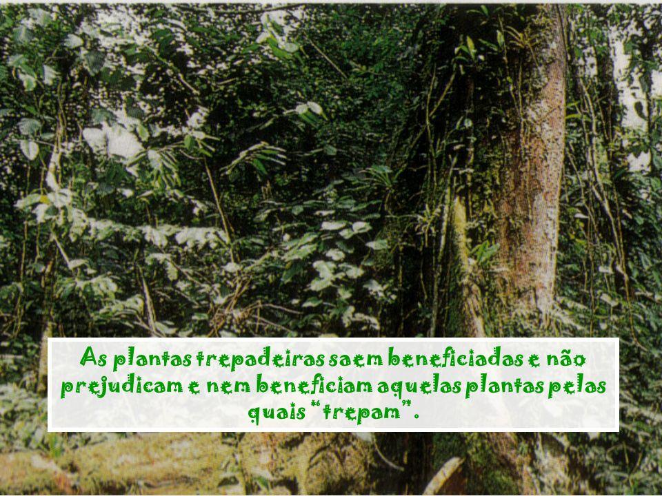 As plantas trepadeiras saem beneficiadas e não prejudicam e nem beneficiam aquelas plantas pelas quais trepam .