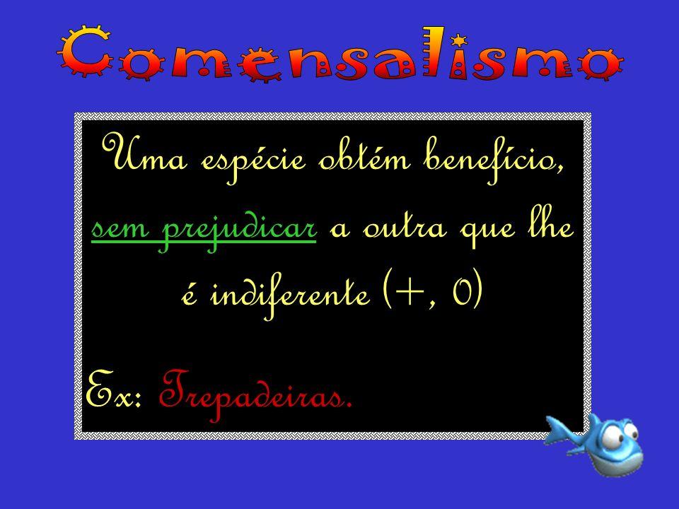 Comensalismo Uma espécie obtém benefício, sem prejudicar a outra que lhe é indiferente (+, 0) Ex: Trepadeiras.