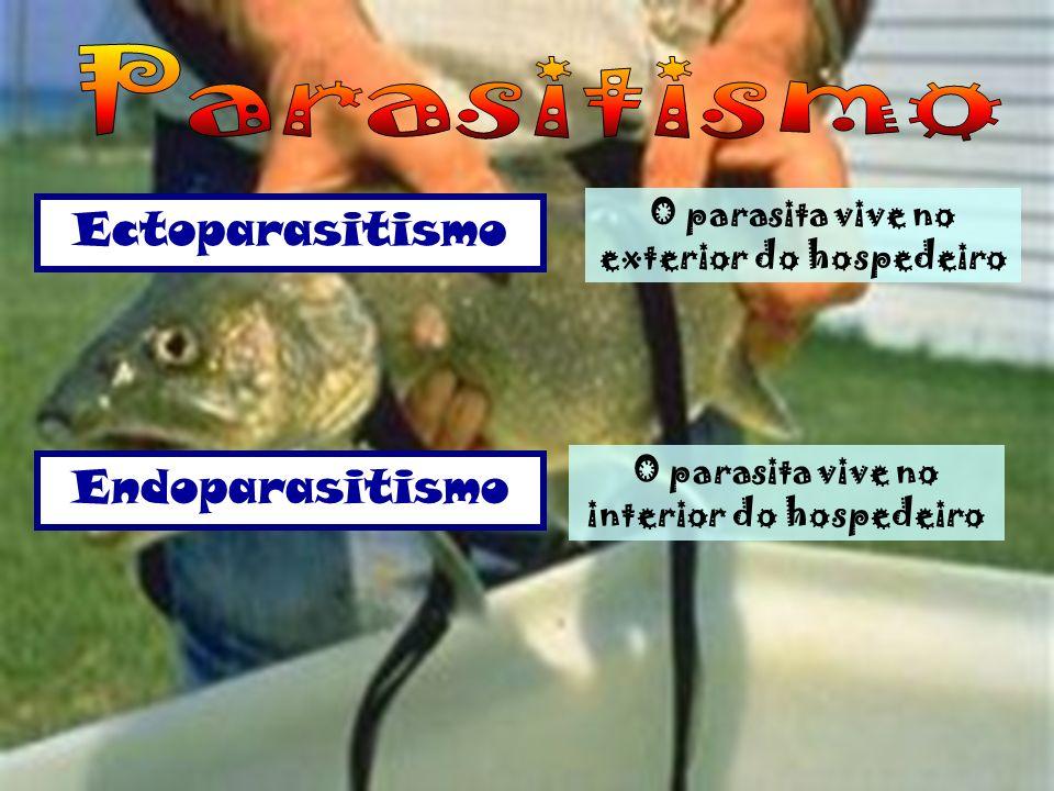 Parasitismo Ectoparasitismo Endoparasitismo
