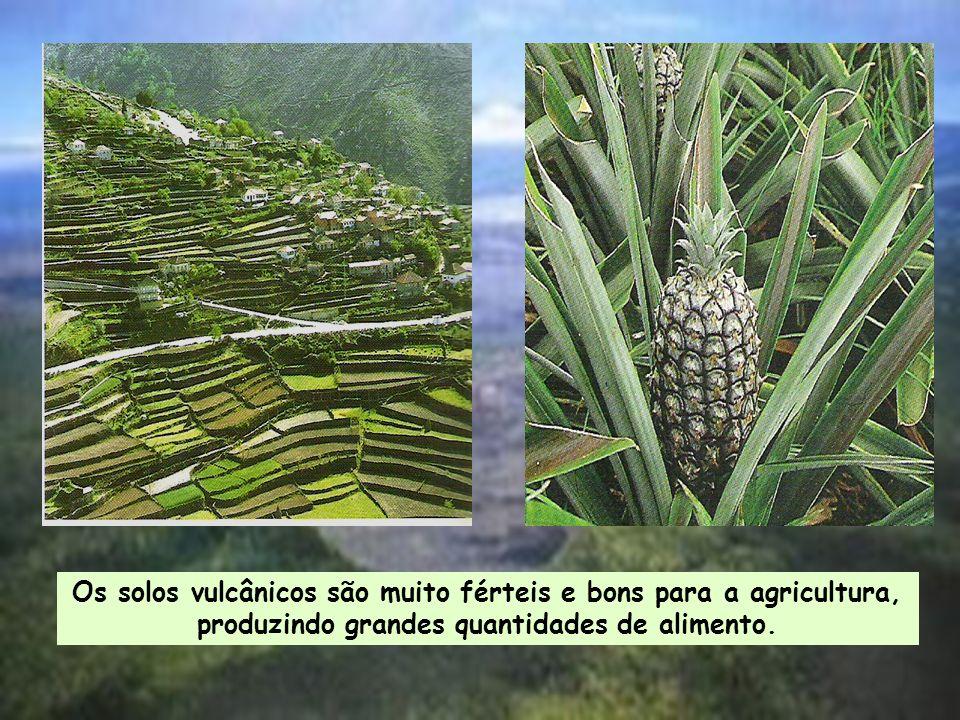 Os solos vulcânicos são muito férteis e bons para a agricultura, produzindo grandes quantidades de alimento.