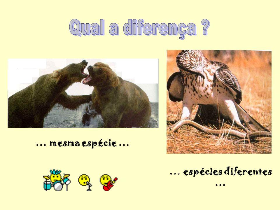 … espécies diferentes …