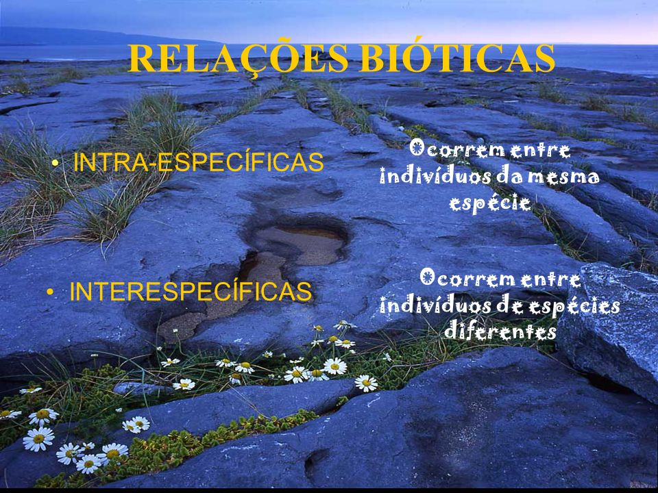 RELAÇÕES BIÓTICAS INTRA-ESPECÍFICAS INTERESPECÍFICAS