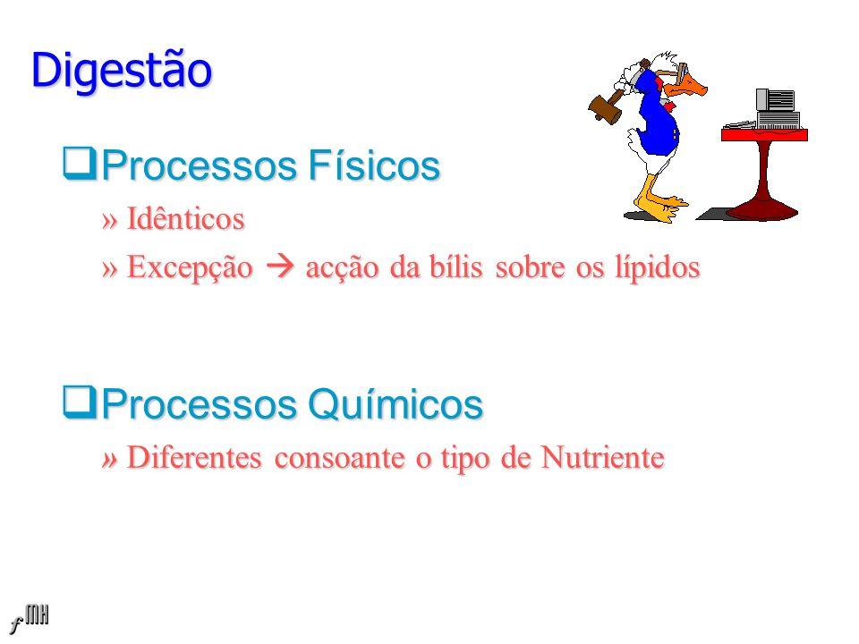 Digestão Processos Físicos Processos Químicos » Idênticos