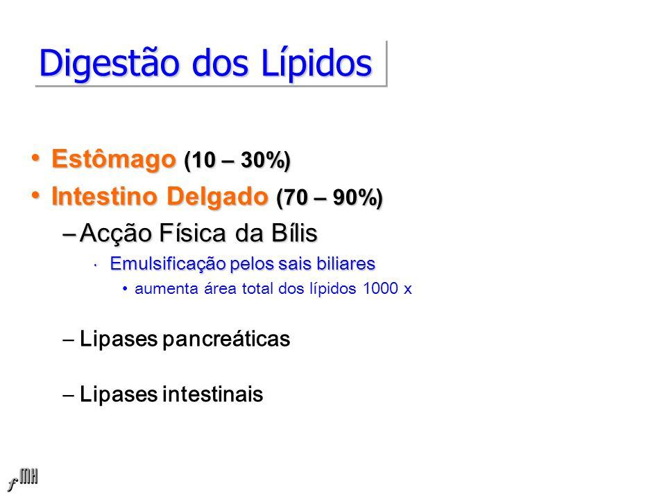 Digestão dos Lípidos Estômago (10 – 30%) Intestino Delgado (70 – 90%)