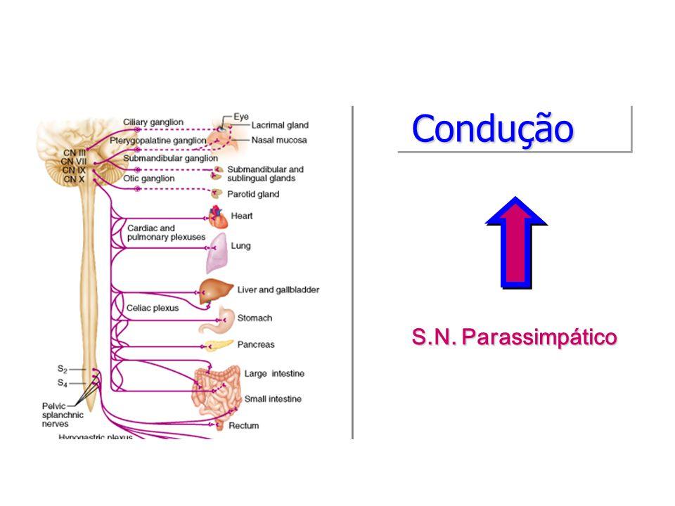 Condução S.N. Parassimpático