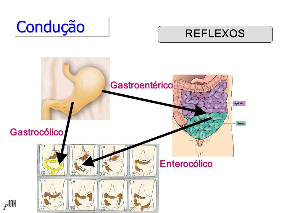 Condução REFLEXOS Gastroentérico Gastrocólico Enterocólico