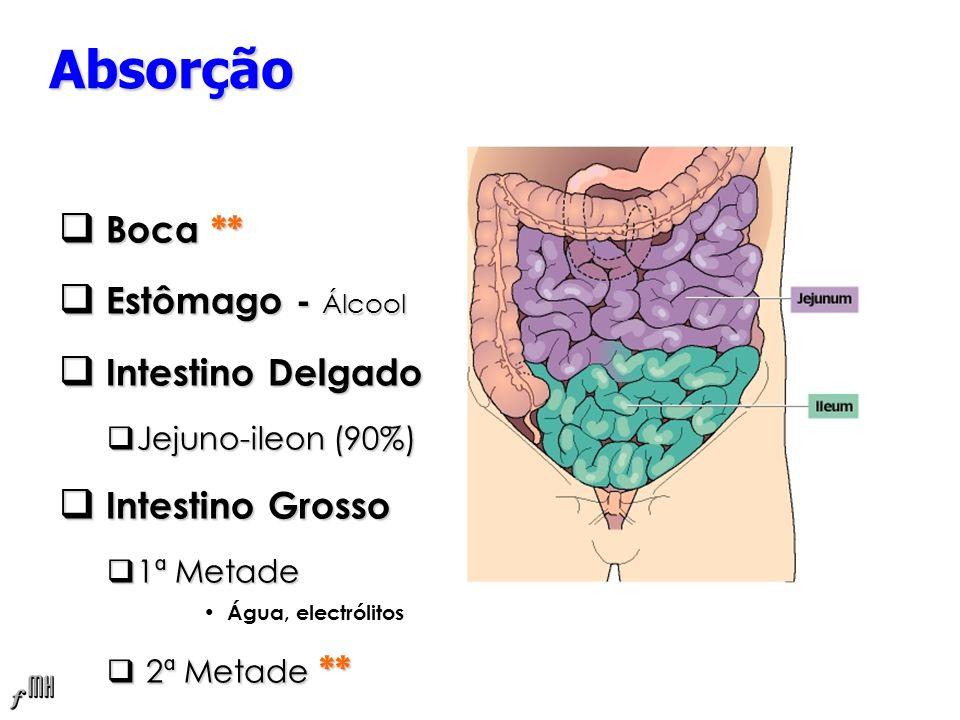 Absorção Boca ** Estômago - Álcool Intestino Delgado Intestino Grosso