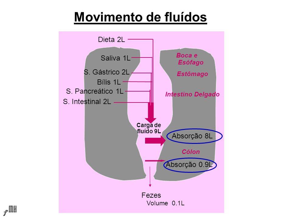 Movimento de fluídos Dieta 2L Saliva 1L S. Gástrico 2L Bílis 1L