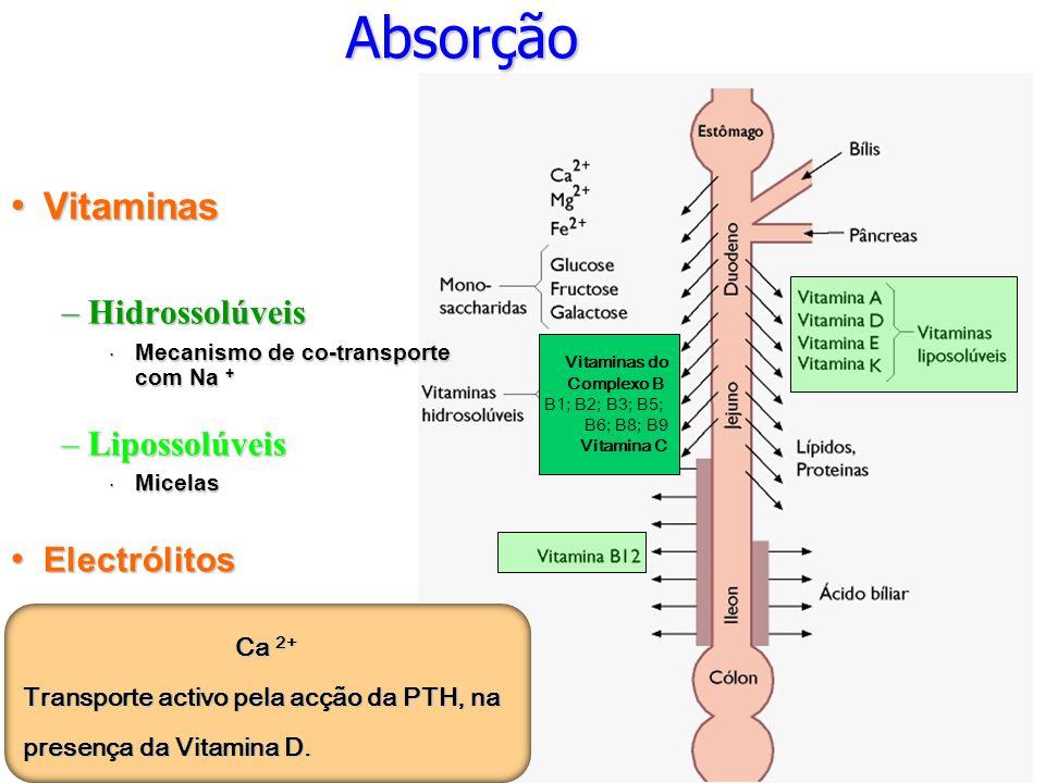 Absorção Vitaminas Hidrossolúveis Lipossolúveis Electrólitos Ca 2+