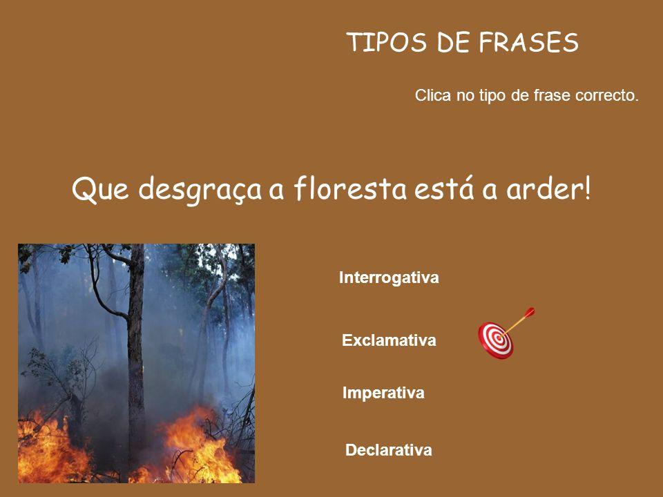 Que desgraça a floresta está a arder!