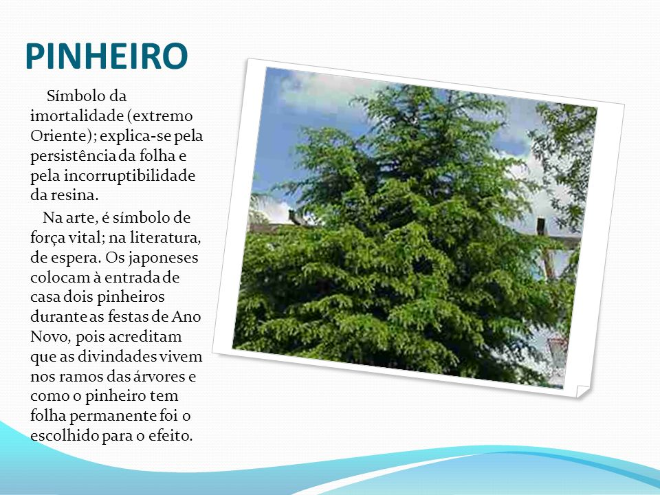 PINHEIRO Símbolo da imortalidade (extremo Oriente); explica-se pela persistência da folha e pela incorruptibilidade da resina.