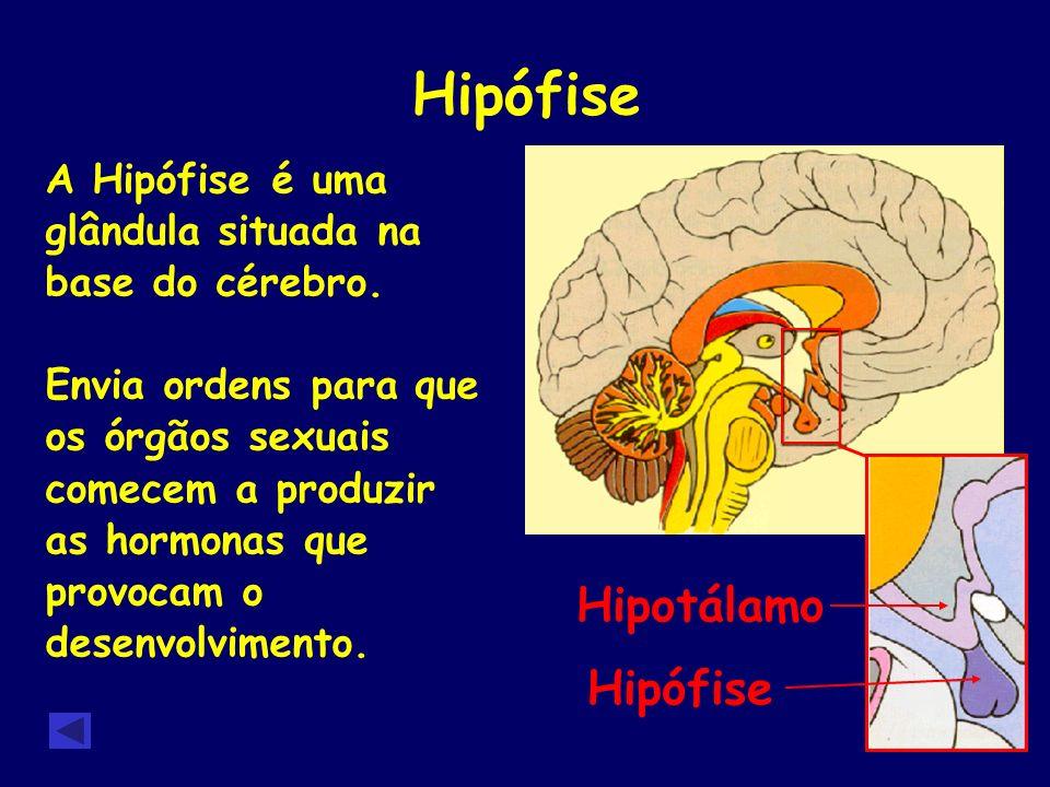 Hipófise Hipotálamo Hipófise