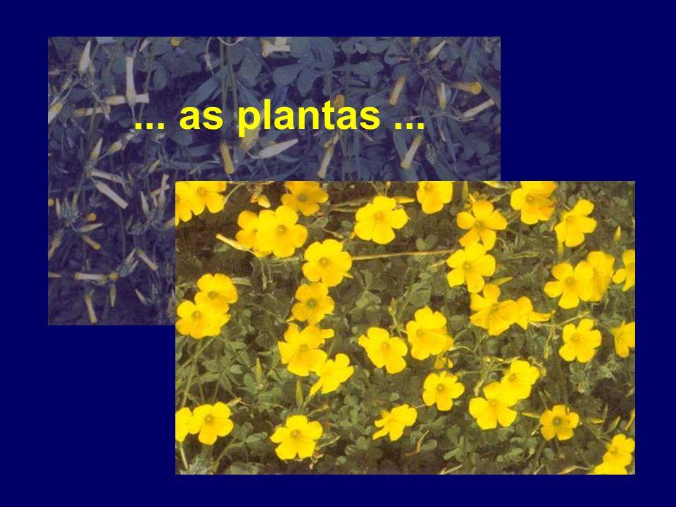 ... as plantas ...
