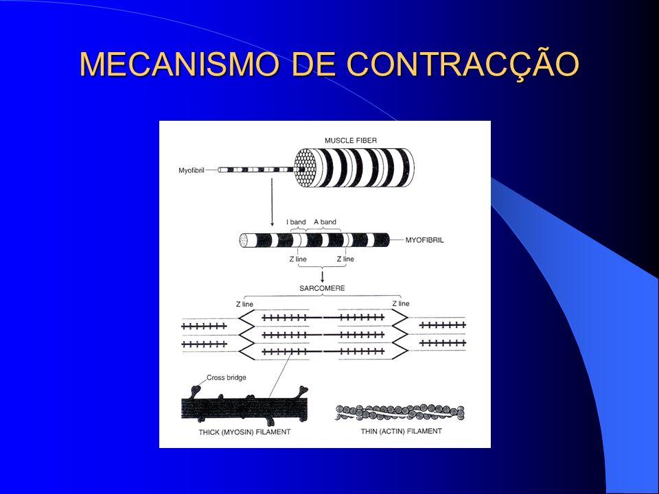 MECANISMO DE CONTRACÇÃO
