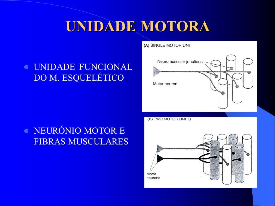 UNIDADE MOTORA UNIDADE FUNCIONAL DO M. ESQUELÉTICO