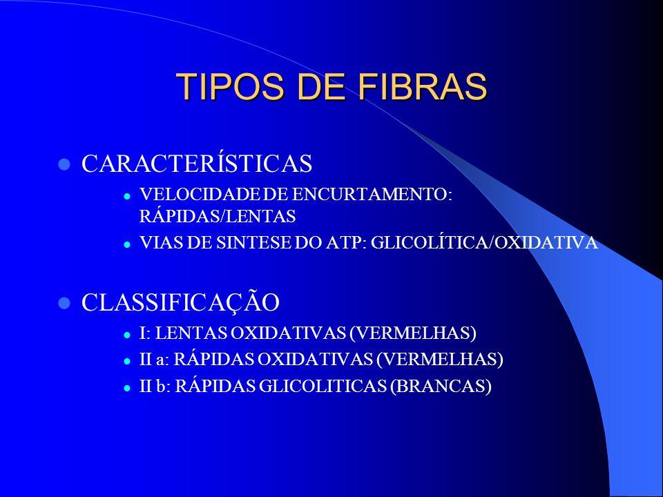 TIPOS DE FIBRAS CARACTERÍSTICAS CLASSIFICAÇÃO
