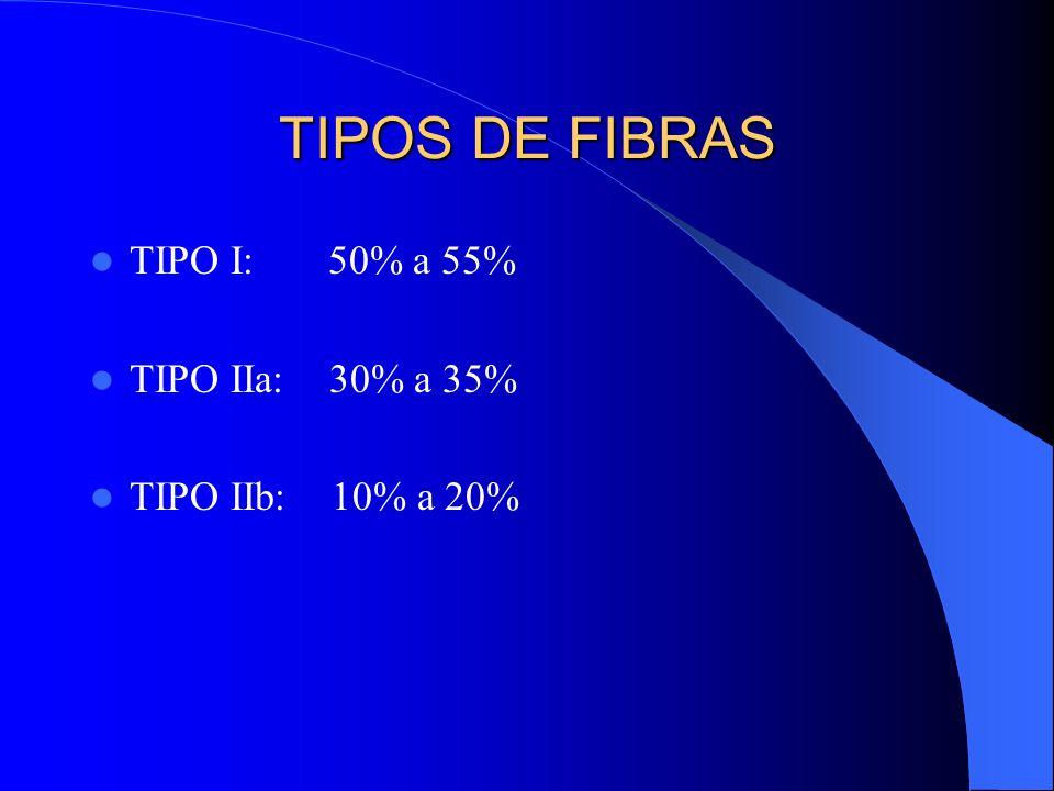 TIPOS DE FIBRAS TIPO I: 50% a 55% TIPO IIa: 30% a 35%