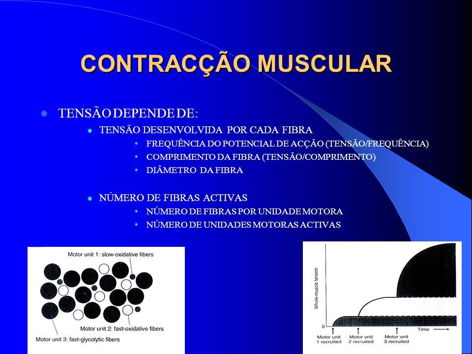 CONTRACÇÃO MUSCULAR TENSÃO DEPENDE DE: